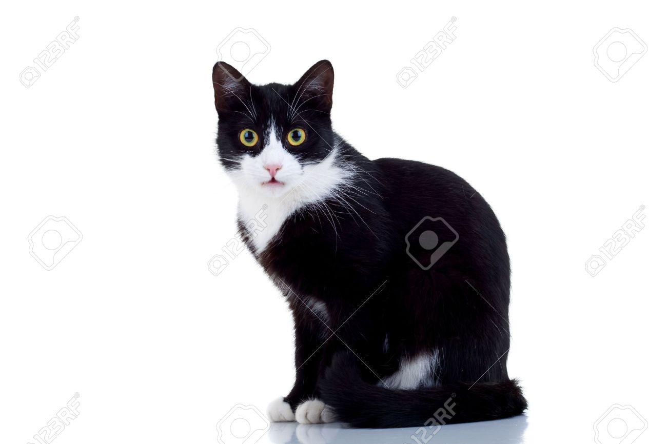 photos de chats noir et blanc. Black Bedroom Furniture Sets. Home Design Ideas