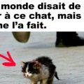le-plus-beau-chat-du-monde-2015