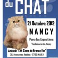 speciale-chatons-3-6-mois-association-les-chats-de-france