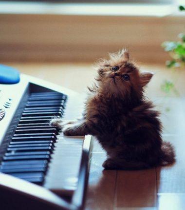 daisy-fait-partie-des-plus-beaux-chats-du-monde_107245_w620