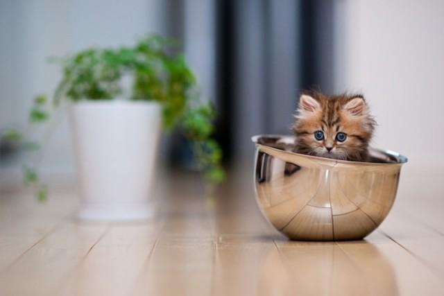 le-plus-beau-chaton-du-monde-1