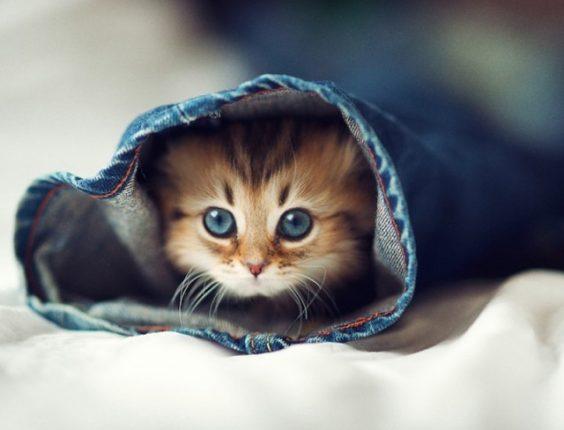 le-plus-beau-chaton-du-monde