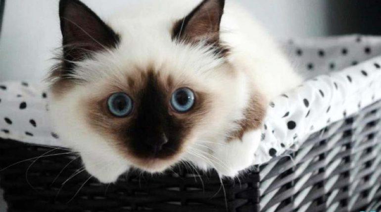 les-chats-les-plus-beaux-du-monde