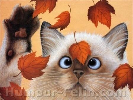 Images chats rigolos - Dessins de chats rigolos ...