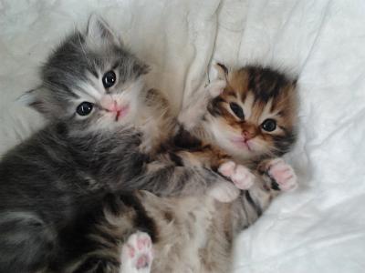 Adopter un chat de 3 mois