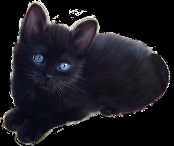 Chat noir yeux bleu