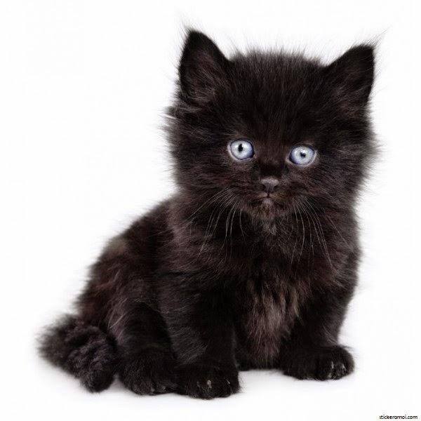 Photo de chaton noir - Photo de chaton rigolo ...