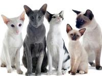 Races de chatons