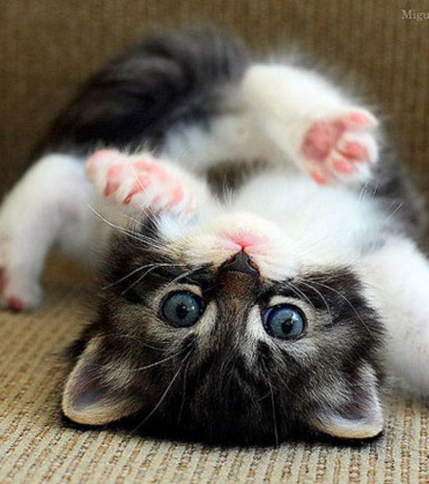 Recherche petit chat