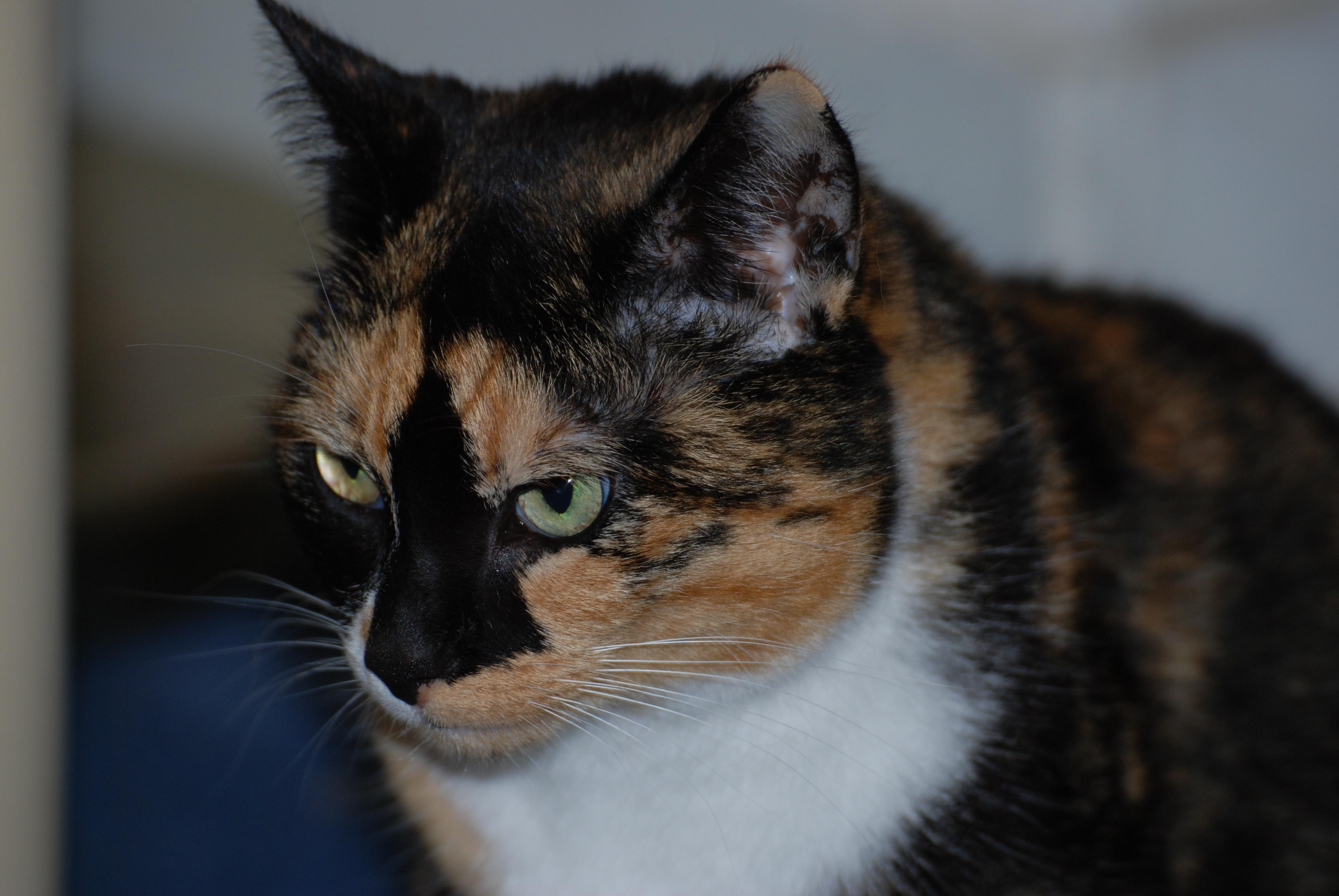 Mon chat a des trous dans son pelage