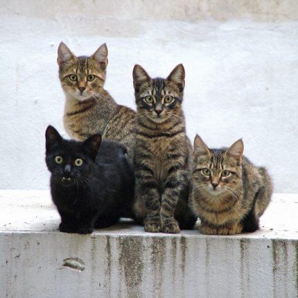 chat-de-gouttiere