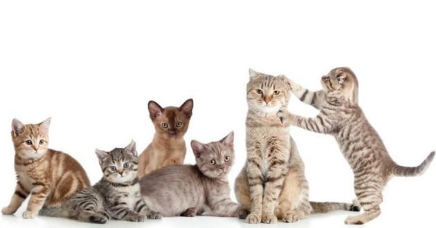 Quelle race de chat choisir pour vivre en appartement