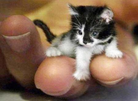 Le plus petit chat