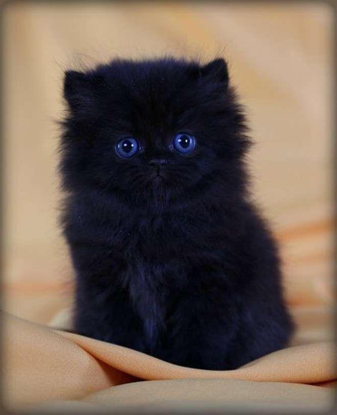 Noir juteux chatte vidéo