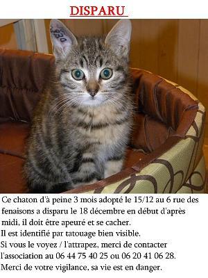 Annonce de chat