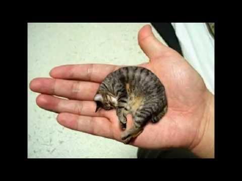 Plus petit chat