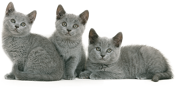 Acheter un chat pas cher