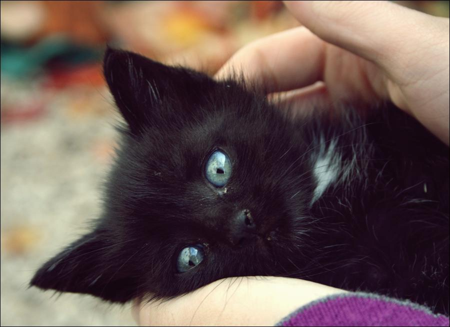 Recherche sur les chatons