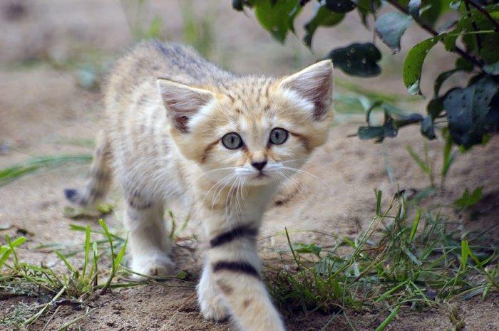 Chat qui reste petit