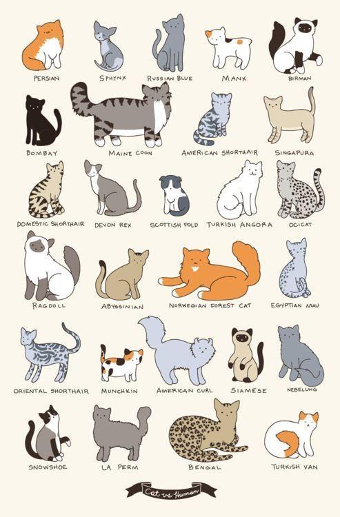 Sorte de chats