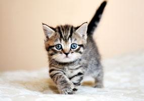 Acheter des chats