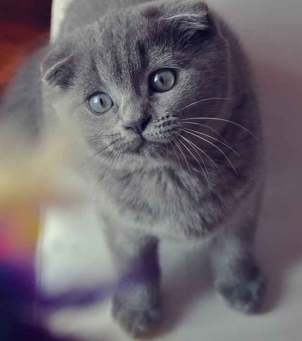 Race de chat les plus mignon
