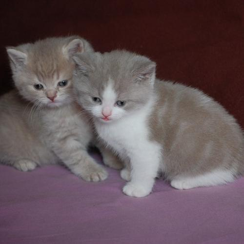 Chatons A Donner Be