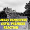 20160904-deux-chats-sentendent-360x220-1