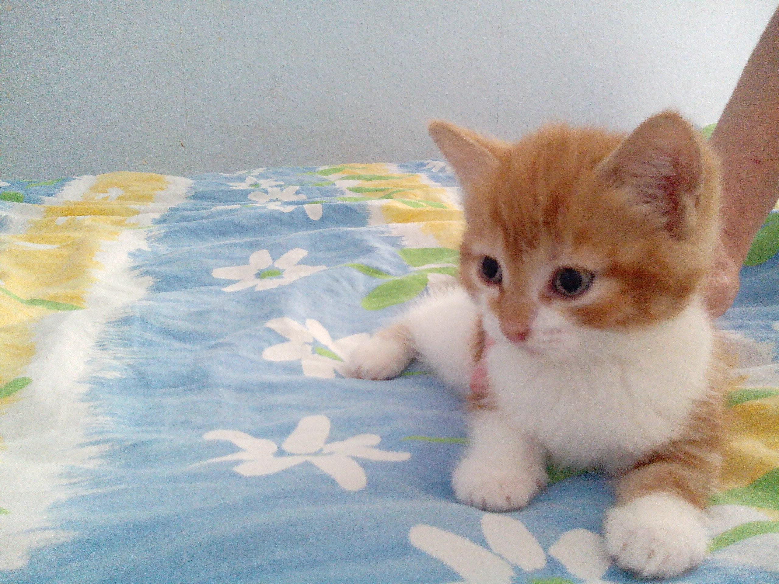 Chatons Donner