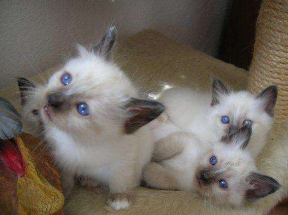 Chaton A Donner 31