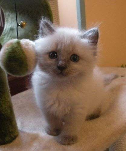 Chaton A Donner 83