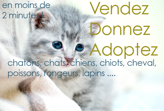 Petite Annonce Animaux A Donner