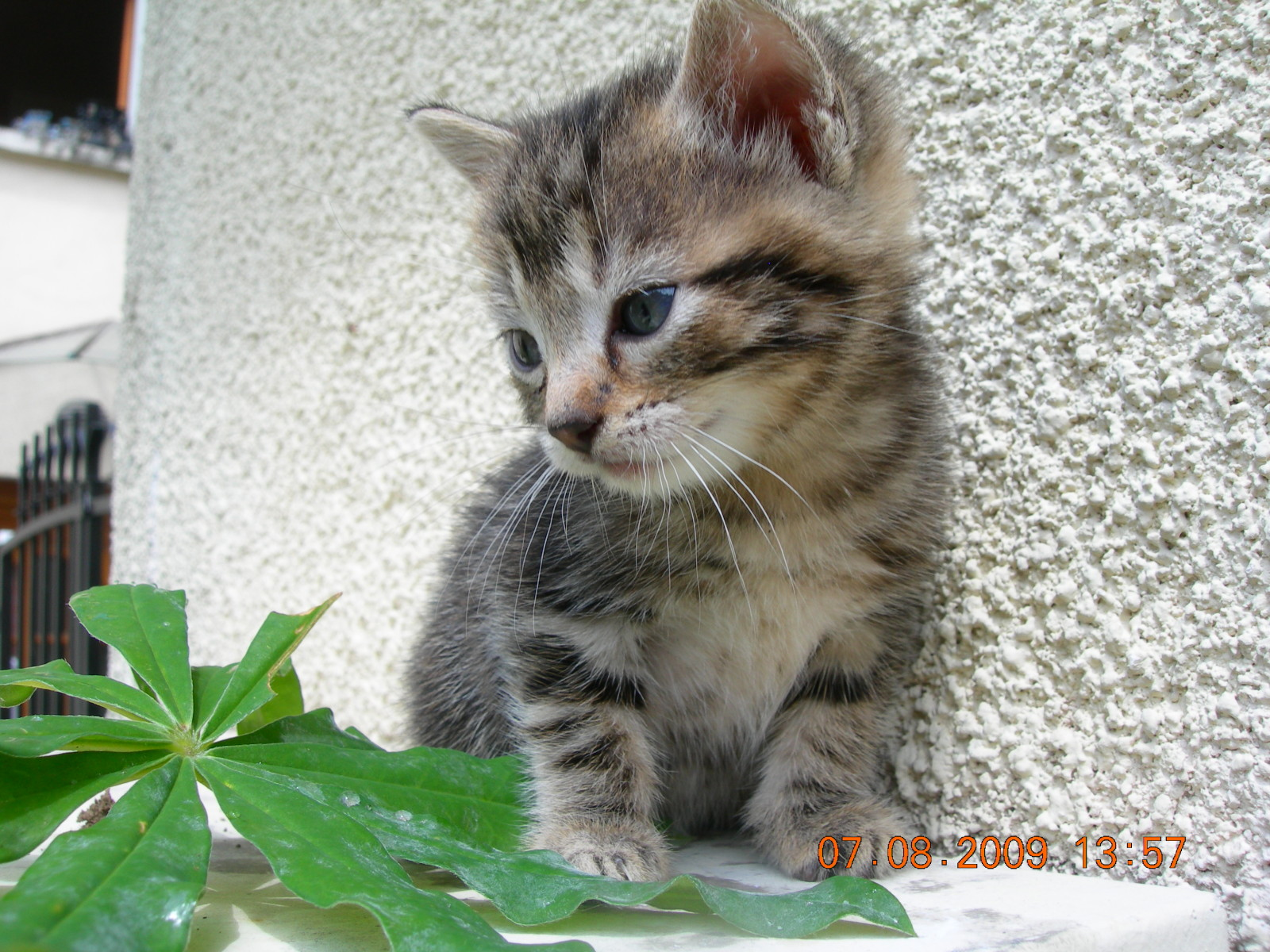 Des Chatons A Donner
