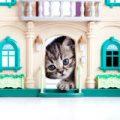 chaton-mignon-jouant-dans-la-maison-de-jouet-24665588