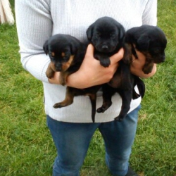 Donne Chien Annonce Chaton A Adopter