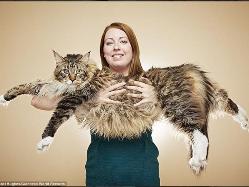 Chat le plus grand