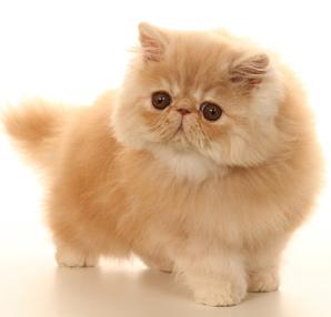 Vente de chat