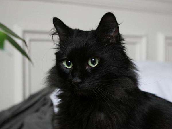 Chat noir race