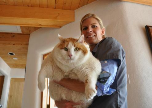 Chat le plus grand du monde