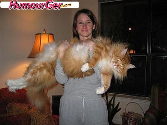Plus gros chat race