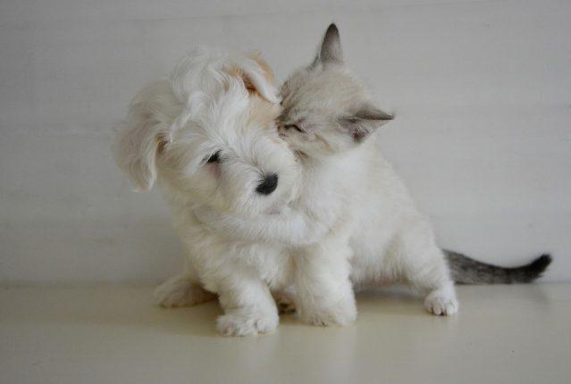 urgence chien et chat